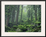 Moss-Covered Rocks Fill a Misty Wooded Hillside Framed Photographic Print by Norbert Rosing