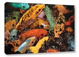 Colorful Koi Gallery Wrapped Canvas Gallery Wrapped Canvas