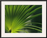 Close View of a Palm Frond Framed Photographic Print by Klaus Nigge
