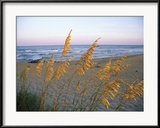 Strandszene mit Seegräsern Gerahmter Fotografie-Druck von Steve Winter