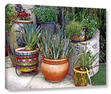 Southwest Potted Garden Gallery Wrapped Canvas *Exclusive* Gallery Wrapped Canvas