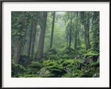 Des rochers moussus couvrent un flanc de coteau boisé enveloppé de brume Photographie encadrée par Norbert Rosing