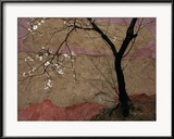 Plum Tree against a Colorful Temple Wall Gerahmter Fotografie-Druck von Raymond Gehman