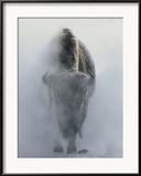 Bison fantômatique dans un nuage de vapeur, en hiver, Parc National de Yellowstone Photographie encadrée par Norbert Rosing