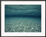 Underwater View Photographie encadrée par Bill Curtsinger