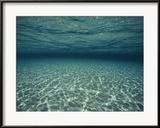 Underwater View Gerahmter Fotografie-Druck von Bill Curtsinger