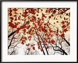 Kale takken en rode esdoornbladeren die langs de snelweg groeien Ingelijste fotodruk van Raymond Gehman