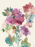 Sweet Hydrangea II Print by Asia Jensen