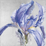 Iris in Argent Giclee Print by Sarah Caswell