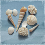 Shell Collection II Giclee Print by Bill Philip