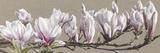 Magnolia Swathe Giclée-Druck von Sarah Caswell