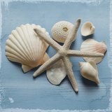 Shell Collection I Giclee Print by Bill Philip