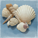 Shell Collection IV Giclee Print by Bill Philip
