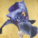 Golden Blue Giclee Print by Sarah Caswell