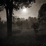 Moonscape Trees Giclee Print by Pete Kelly