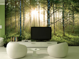 Forest Mural Wallpaper Mural