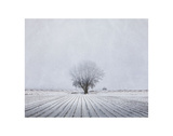 Foggy Winter Morning Prints by Trent Foltz