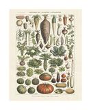 Legumes I Lámina giclée por Adolphe Millot