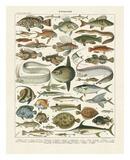 Poissons I Lámina por Adolphe Millot