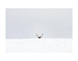Elk Prints by Trent Foltz