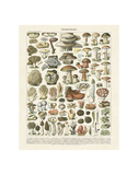 Champignons II Poster af Adolphe Millot