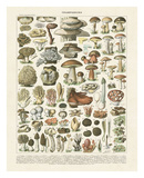 Champignons II Plakater af Adolphe Millot