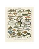 Poissons I Poster von Adolphe Millot
