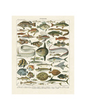 Poissons I Poster by Adolphe Millot
