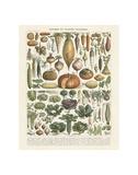 Legumes II Reprodukcje autor Adolphe Millot