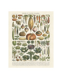 Legumes II Prints by Adolphe Millot