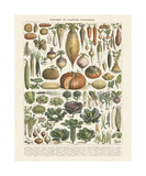 Legumes II Wydruk giclee autor Adolphe Millot