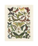 Papillons I Giclée-tryk af Adolphe Millot