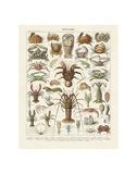 Crustaces Plakater af Adolphe Millot