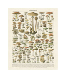 Champignons I Giclee Print by Adolphe Millot