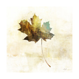 Falling Maple Leaf 2 Prints by Ken Roko