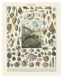 Mollosques II Sztuka autor Adolphe Millot