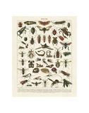 Insectes I Kunstdrucke von Adolphe Millot