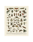 Insectes I Prints by Adolphe Millot