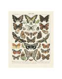 SchmetterlingeII Poster von Adolphe Millot