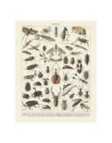 Insectes II Posters af Adolphe Millot