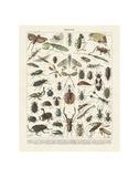 Insectes II Plakaty autor Adolphe Millot