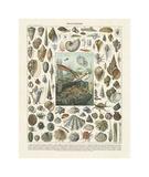 Mollosques II Lámina giclée por Adolphe Millot