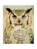 Stoic Owl Poster av  Z Studio