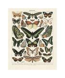 Papillons III Giclée-tryk af Adolphe Millot