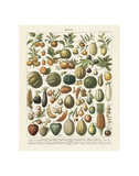 Fruits I Prints by Adolphe Millot