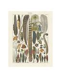 Plumes Affiches par Adolphe Millot