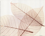 Sheer Leaves III Posters