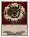 Rosone Antico III Posters