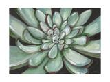 Desert Succulent Prints by Filippo Ioco