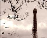 Tour Eiffel Print by Judy Mandolf